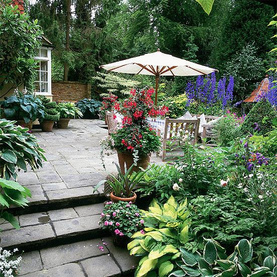 Портулак цветы в саду 28