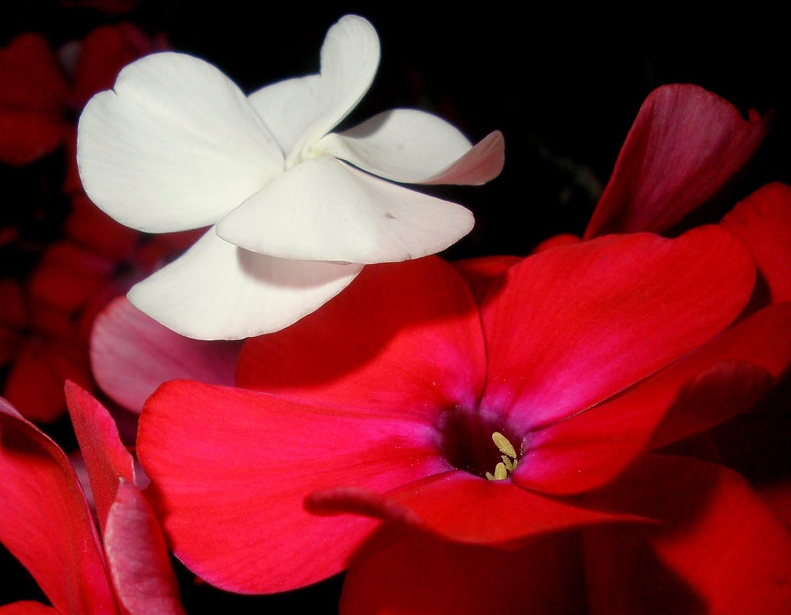 Веселый солнечный цветок