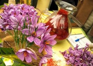 Выращивание шафрана, посадка и уход