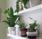 Топ 15 Комнатных растений, растущих в тени с фото