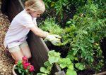 7 простых шагов для создания первого сада