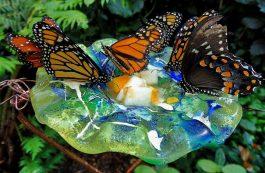 10 самодельных кормушек для бабочек