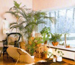 Лучшие комнатные растения для солнечных окон — топ 10