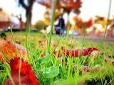 Работы в саду осенью
