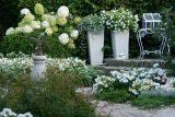 Белый сад — советы и рекомендации