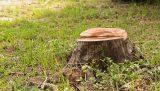 Деревья: удаление и обработка пня