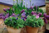 Как облегчить зимовку растениям для патио