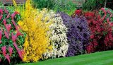 Весенние цветущие кустарники