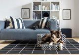 Как приспособить дом для собак и кошек