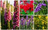 Цветочное руководство: узнайте о цветущих растениях