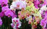 Выращивание орхидей для начинающих