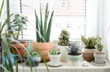 7 любимых комнатных растений для окон, выходящих на запад