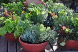 10 лучших овощей, для выращивания  в контейнерах