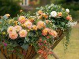 Стильный  сад — живописные горшки