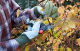 Пять видов растений, которые нужно обрезать осенью