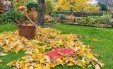 Советы по уходу за деревьями осенью