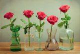 Как сохранить срезанные розы свежими