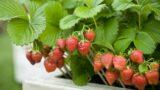 5 лучших культур для вашего съедобного контейнерного сада