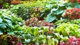 Выбор однолетних и многолетних растений и уход за ними