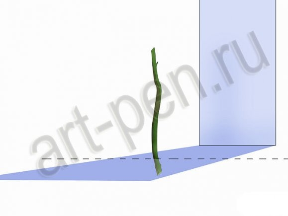 Пошаговое проращивание черенков бугенвиллии комнатной в грунте