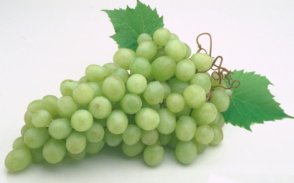 Прививка и размножение винограда