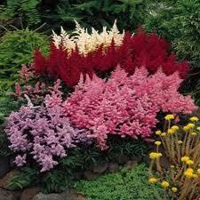 Клумбы и цветники Много разных цветов и кустарников.
