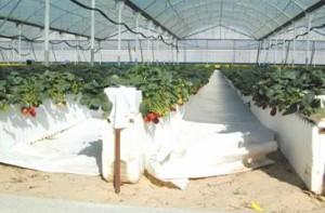 Маты для выращивания клубники 67