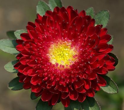 Растения для клумбы: цветы с 37