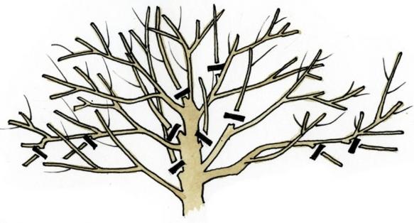 способны ослабить дерево,