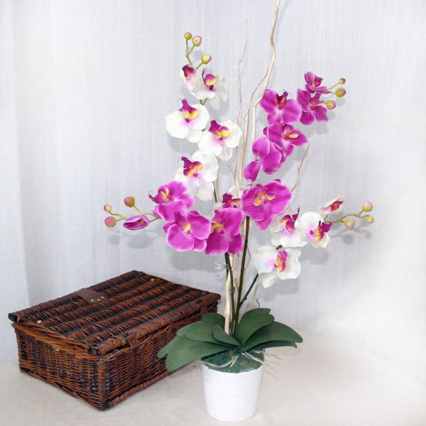 Цветы комнатные  архидея