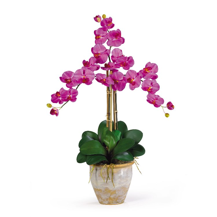 орхидеи домашние