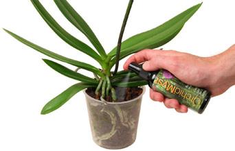 Орхидей уход в домашних условиях