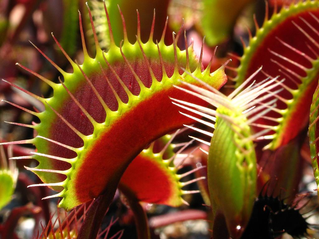 Carnivorous plants eating human