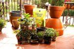 Создай свой огород на балконе