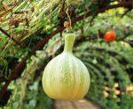 3 способа использования заградительных решеток в саду
