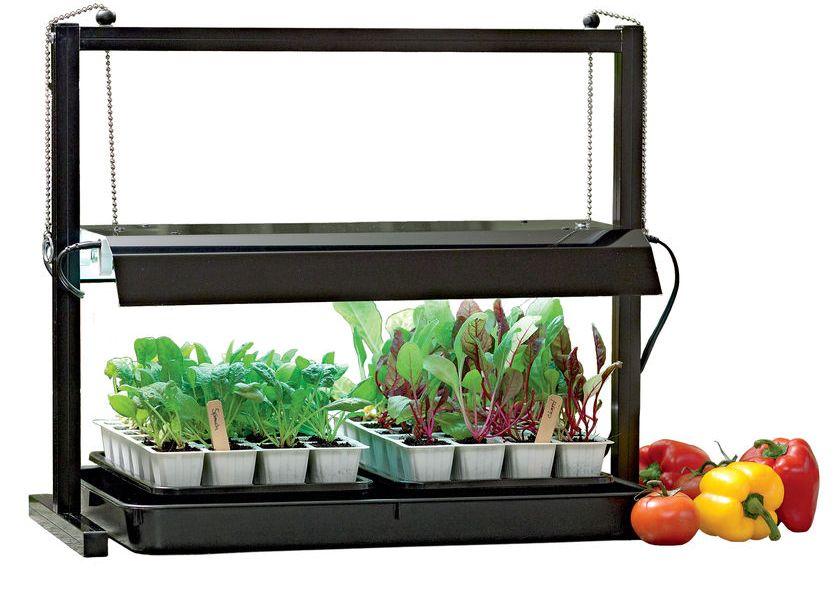 Как вырастить шафран из семян на даче и дома - посадка и уход